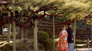 Couple having wedding photos taken