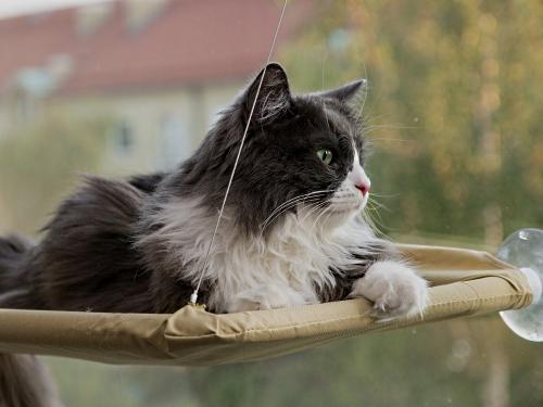 Che Cosa Pensano I Gatti Gatto Magazine