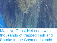 https://sciencythoughts.blogspot.com/2018/04/massive-ghost-net-seen-with-thousands.html