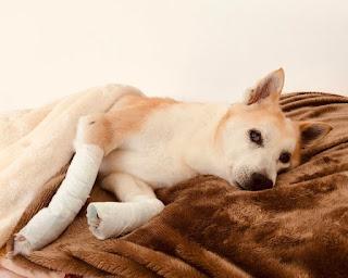 aliviar stress de fratura em cães