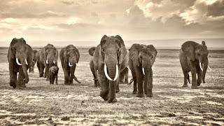 Μέσα σε 40 χρόνια η Γη έχασε το 60% των άγριων ζώων