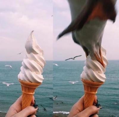 Witziges Urlaubsbild Möwe klaut Eiswaffel