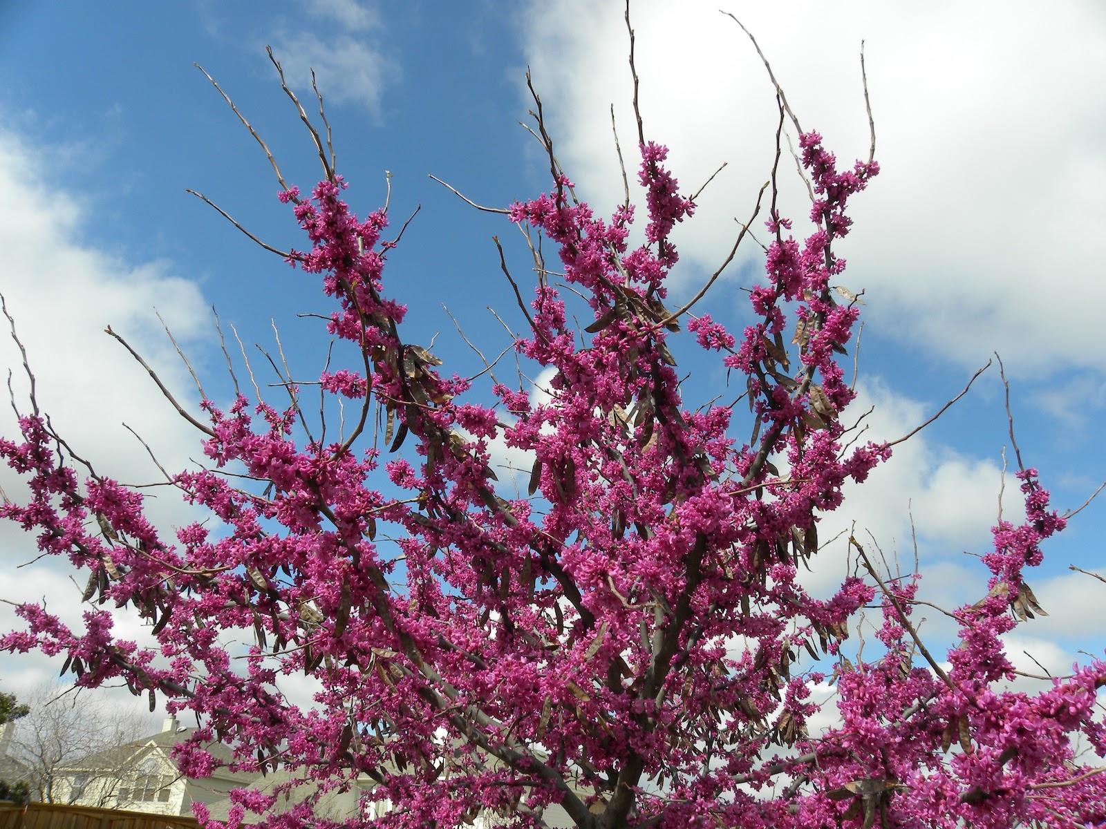 Family Adventures Spring Flowers Around The Blocks