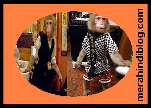 बंदर करते हैं इस रेस्टोरेंट में वेटर का काम - Is restorent me monkey vetar ka kaam karte hai