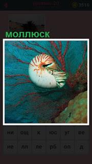 под водой плавает небольшой моллюск