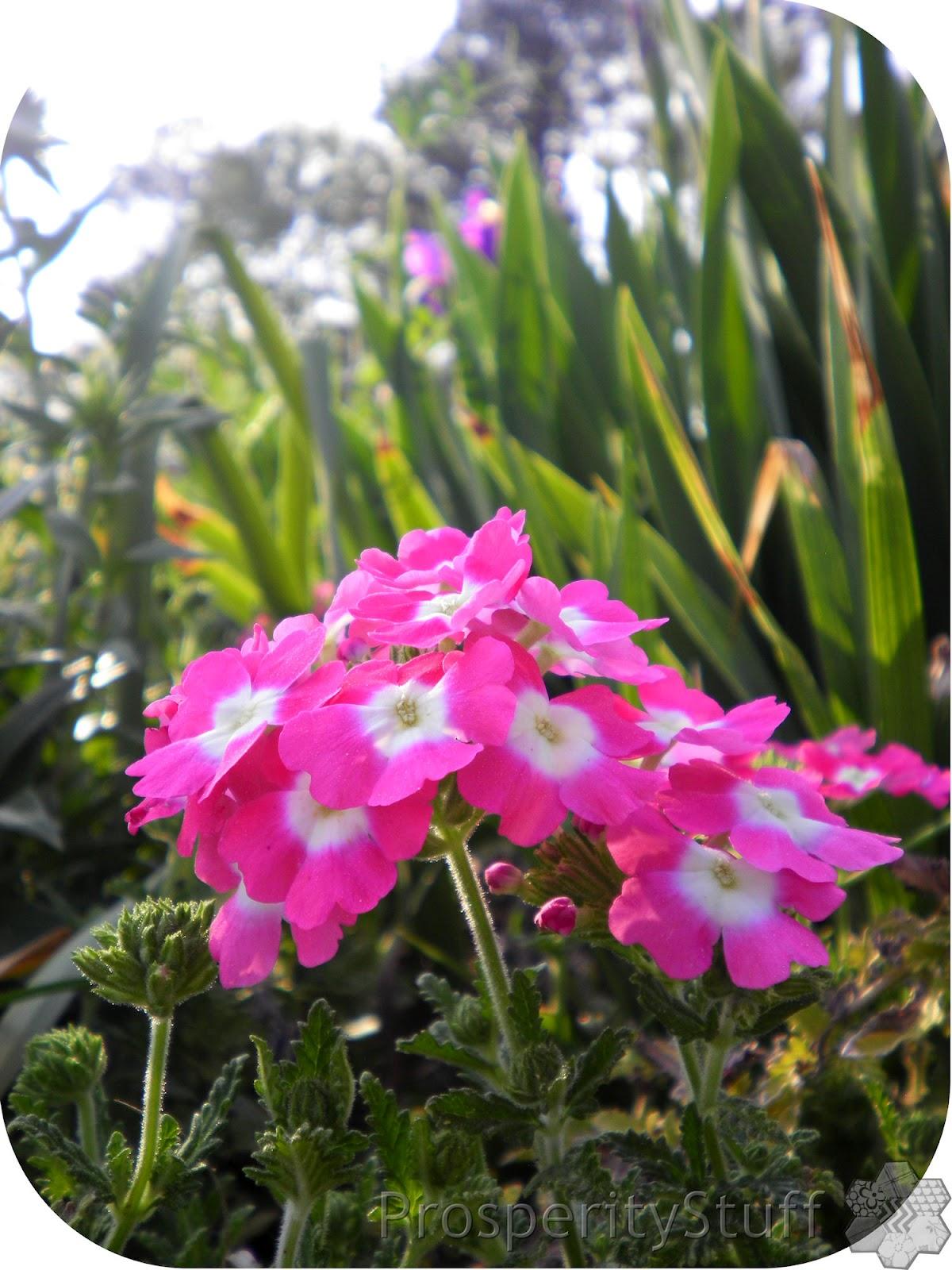 ProsperityStuff Quilts: Pink Perennials