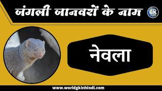 Mongoose Animal Name In Hindi