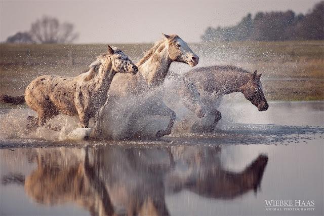 Green Pear Diaries, fotografía, Wiebke Haas, caballos