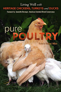 Pure Poultry Living Well with Heritage Chickens, Turkeys and Ducks