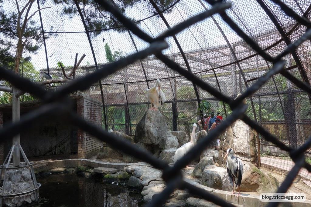 新竹市立動物園(50).JPG