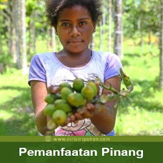 ciri ciri pohon tanaman pinang