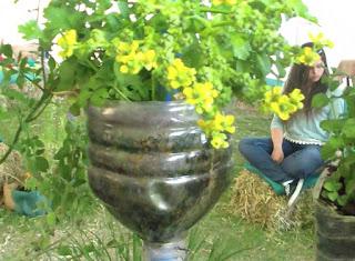 Huertos y jardines verticales caseros con botellas, PVC y pl