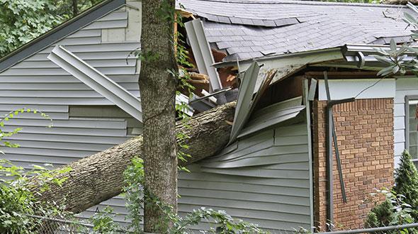 Neighbors diseased tree fell on my home