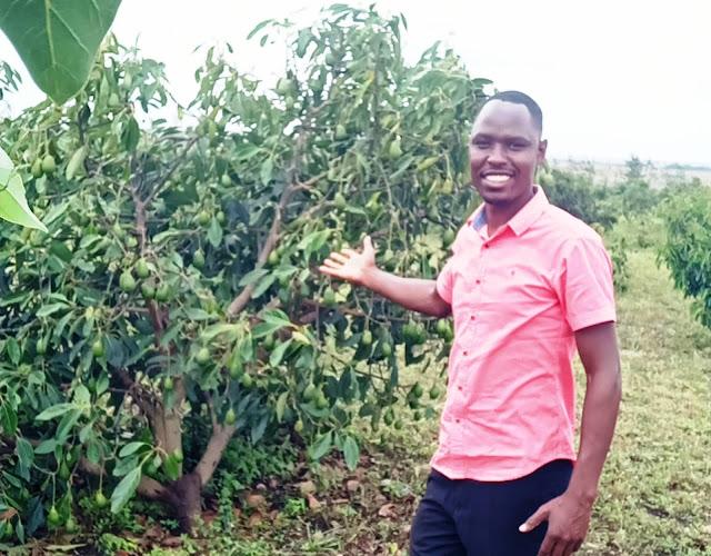 hass avocado farming in Kajiado