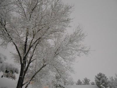 snow, tree