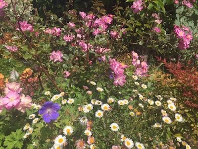 Massifs-fleuris-blog-paris-a-louest