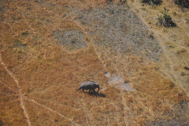 volo sul delta okavango:elefante