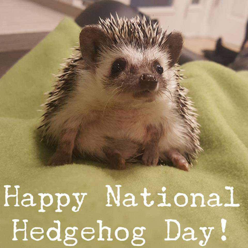National Hedgehog Day Wishes