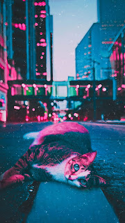 Alone in The City Cat Mobile HD Wallpaper