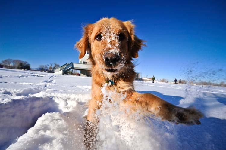 Σκυλάκια έρχονται σε επαφή πρώτη φορά με χιόνι και ξετρελαίνονται! (βίντεο)