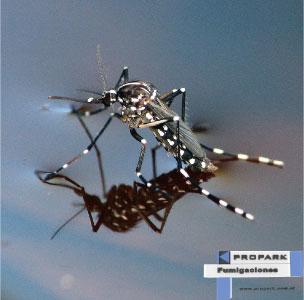 Influencia de la Sombra y el Tránsito Peatonal en la Reproducción del Mosquito Aedes