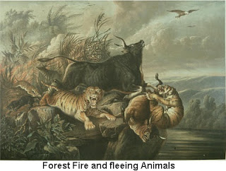 Forest Fire and Fleeing Animals