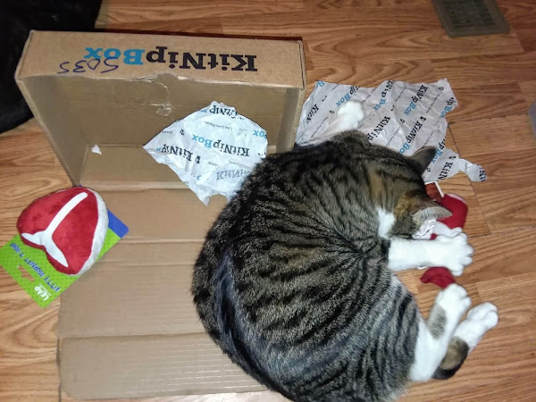 KitNipBox Subscription Box For Cats Is Awesome!! Get Yours 15%Off