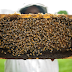 Black honey for weight loss