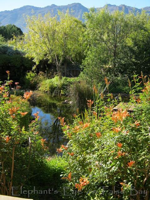 Porterville garden 2104