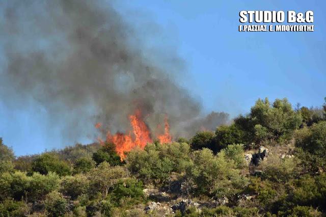 Πυρκαγιά στο Νέο Ροεινό Ναυπλίου
