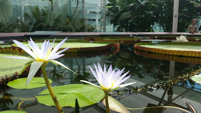 Amazon Waterlily Pavilion, Botanical Gardens.