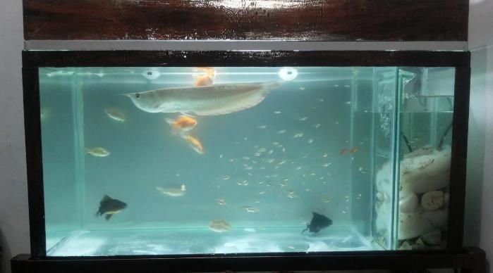 Filter Aquarium yang Bagus untuk Aquascape & Ikan Hias ...