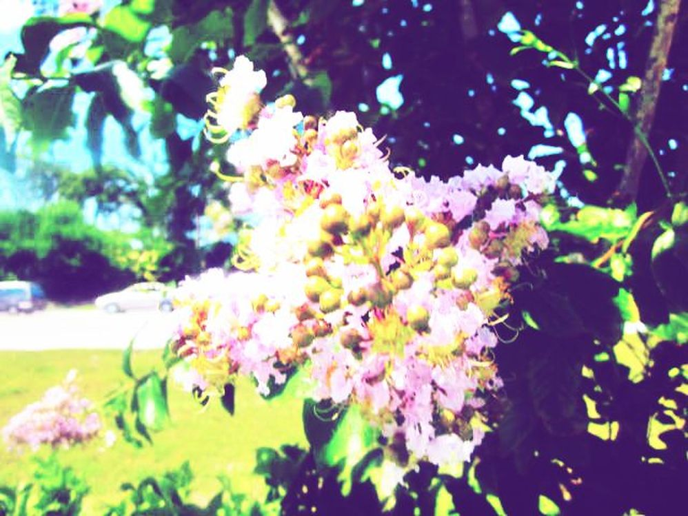 Bee Pollen Flowering Purple Tree in the Springtime
