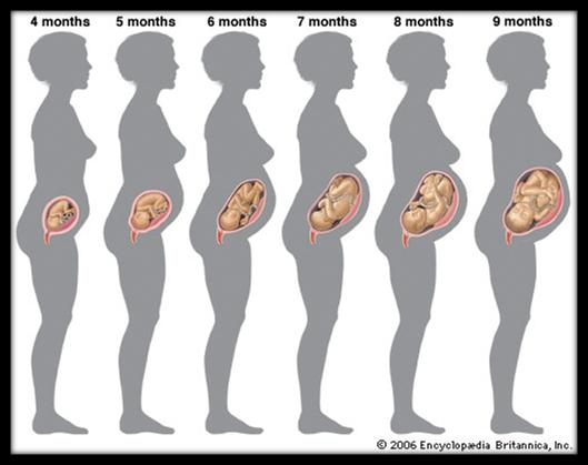 Bagaimana Cara menambah Berat janin pada usia kandungan 6 bulan keatas?