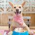 Ποιο είναι το άοσμο και άγευστο χημικό υγρό που είναι απαραίτητο για τον σκύλο;...