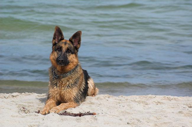 Plaże, miejsca nad jeziorami w Polsce, gdzie można przebywać z psem