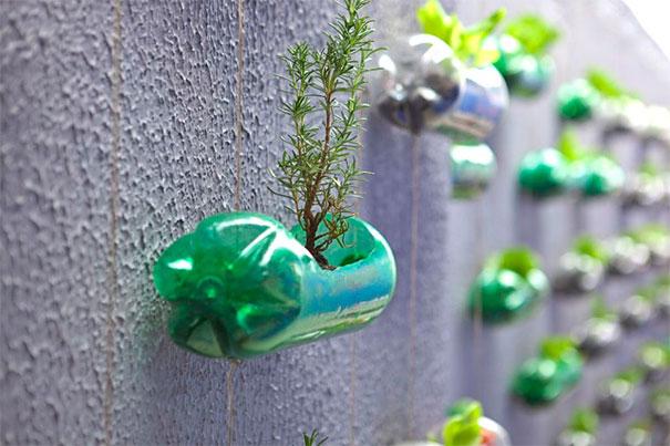plantar em garrafa pet 2