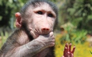 جدري القردة …. خطر يهدد البشرية
