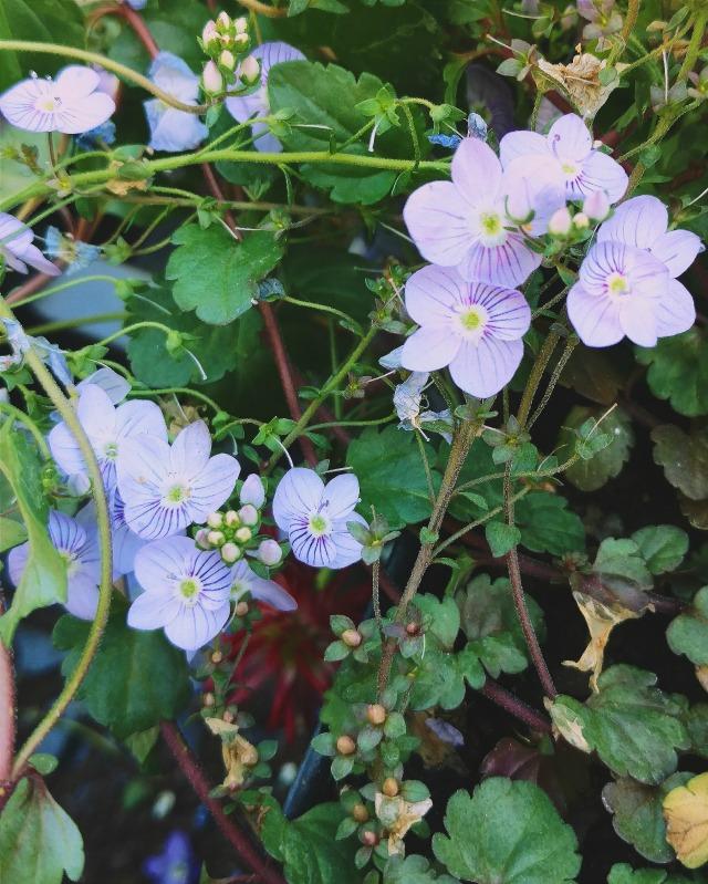 Little purple flowers.