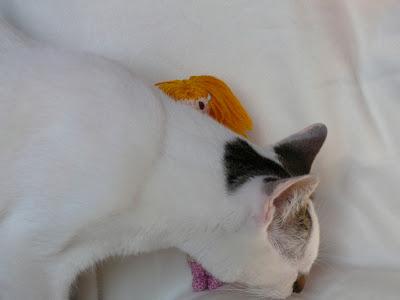 mi gato  es muy travieso
