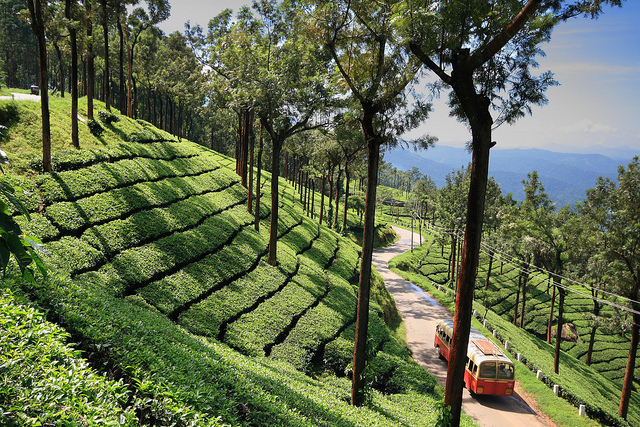 best place to stay in munnar for summer, places with coolest climate in munnar even for hottest summer season