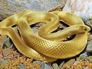 Sabias que ....en Brasil se encuentra la isla con mayor cantidad de serpientes venenosas?