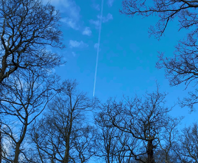 An aeroplane vapour trail across a blue sky framed by trees