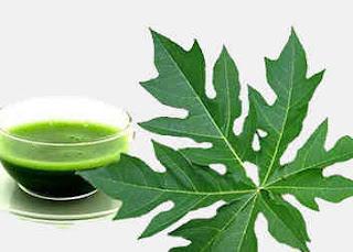 Cara ampuh menghilangkan jerawat dan bekas jerawat secara alami dengan daun pepaya