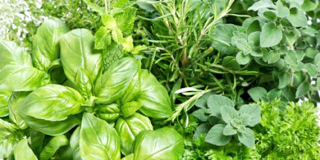 7 zelenih začina korisnih za zdravlje