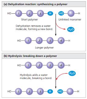 Reaksi hirolisis, reaksi dehidrasi, pembentukan polimer dari monomer, reaksi pembentukan polimer dari monomer, proses pemecahan polimer menjadi monomer, Reaksi hidrolisis adalah, reaksi hidrolisis pemecahan air, reaksi dehidrasi adalah,