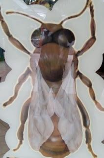 Mengenal Lebih Dekat Tentang Lebah Madu
