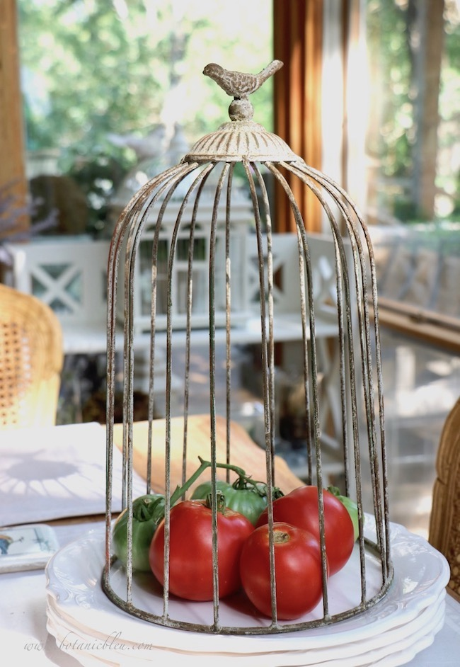 A wire cloche protects home grown tomatoes and still allows air to circulate around them