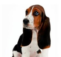 Dog Obedience Class And Dog Obedience Training Benefits