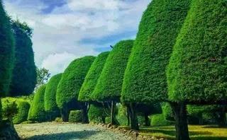Taman Cemara ala Bukit Jamur Rancabolang.